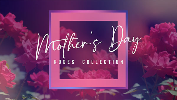 mothers_day_roses_600